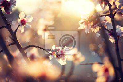 Piękna przyroda sceny z kwitnącego drzewa i flary słońca