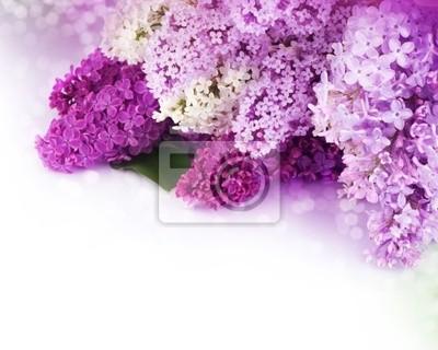 Piękne Lilac Border Kwiaty
