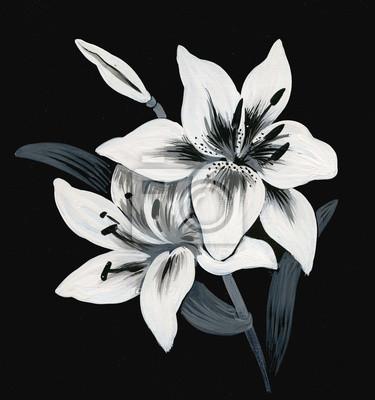 Piękne malowane lilia na czarnym tle