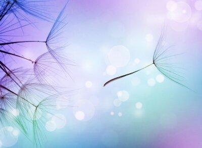 Piękne streszczenie latające Nasiona mniszka lekarskiego