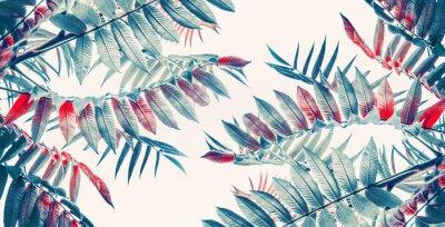 Naklejka Piękne tropikalnych liści tła, baner