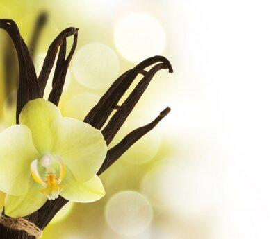 Piękne ziaren wanilii i kwiatu na tle rozmytych