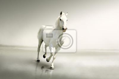 Piękny biały koń w ruchu