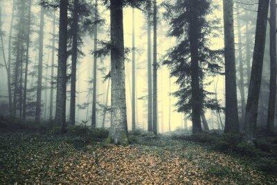 Naklejka Piękny mglisty drzewo las bajkowy. Magia mgliste światło w lesie.
