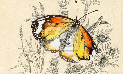 Piękny obraz motyl