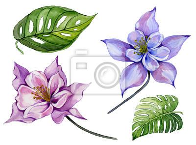 Piękny tropikalny zestaw kwiatowy (fioletowy i niebieski aquilegia, duże tropikalne liście). Colourful kolombiny kwiat i zieleń liście odizolowywający na białym tle. Malarstwo akwarelowe.