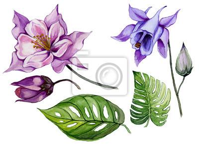 Piękny tropikalny zestaw kwiatowy (fioletowy i niebieski aquilegia, pączek i liści). Colourful kolombiny kwiat i zieleń liście odizolowywający na białym tle. Malarstwo akwarelowe.