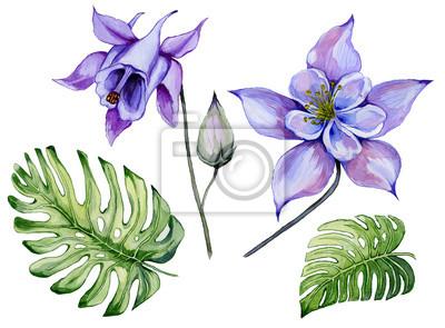 Piękny tropikalny zestaw kwiatowy (niebieskie i fioletowe liście konwalii i monstera). Colourful kolombiny kwiat i egzotów liście odizolowywający na białym tle. Malarstwo akwarelowe.