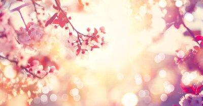 Piękny wiosenny charakter sceny z różowym drzewa kwitnące