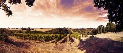 Naklejka Piękny zachód słońca nad winnic w Toskanii