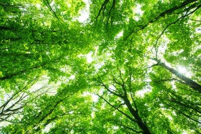 Naklejka piękny zielony las