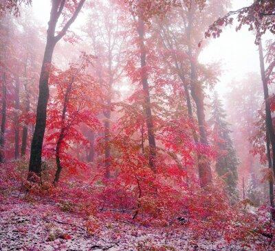 Naklejka Pierwszy śnieg na jesieni