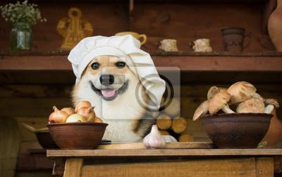 Naklejka Pies Welsh Corgi przygotowuje pieczarki na obiad z cebulą i czosnkiem.