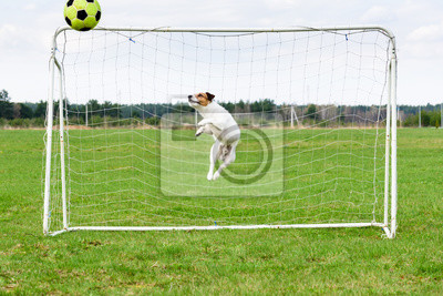 Piłka nożna bramkarz w ładnym skoku łapania piłki na bramkę