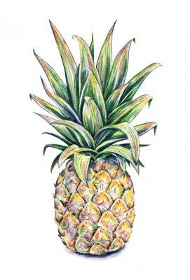 Naklejka Pineapple on a white background. Watercolor illustration