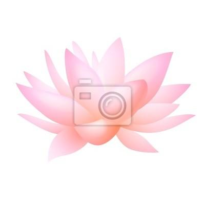 Pink Lotus lub wody kwiat lilii. Wektor