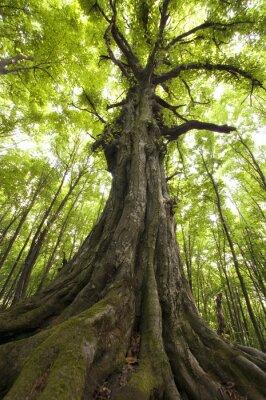 pionowe zdjęcie starego drzewa w zielonym lesie