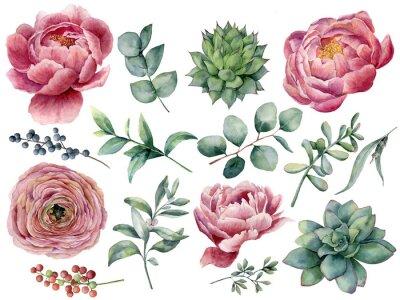 Naklejka Piwonia akwarela, soczyste i Jaskier zestaw kwiatowy. Ręcznie malowane czerwone i niebieskie jagody, liście eukaliptusa na białym tle. Ilustracja do projektowania, drukowania.