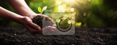 Naklejka Plant in Hands. Pojęcie ekologii. Tło natury