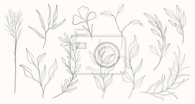 Naklejka Plant nature hand drawn set. Collection botanical element.Elegante vintage style.