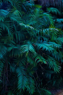 Naklejka Plante exotique