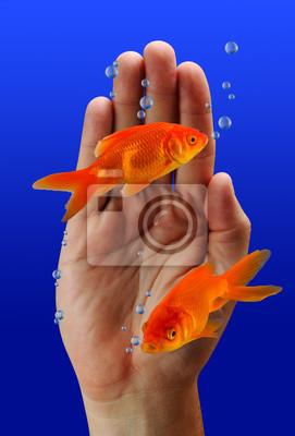 Pływanie Goldfish przez strony.