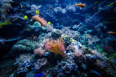 Naklejka podwodny krajobraz rafy koralowej z kolorowych ryb