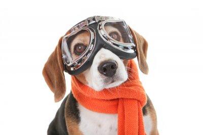 Naklejka pojęcie wakacje, pies w pływające okulary