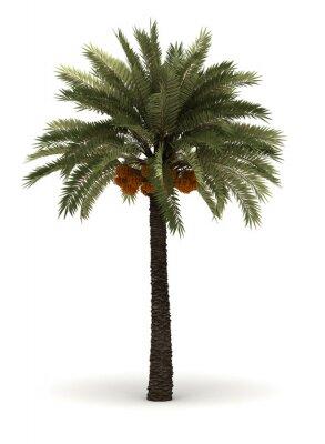 Naklejka Pojedyncze Palm Tree