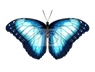 Pojedyncze szczegó? Owe Blue Butterfly morpho na bia? Ym tle.
