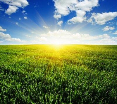 Naklejka pola i słońce