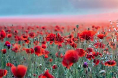 Naklejka Pole czerwone maki na zachód słońca