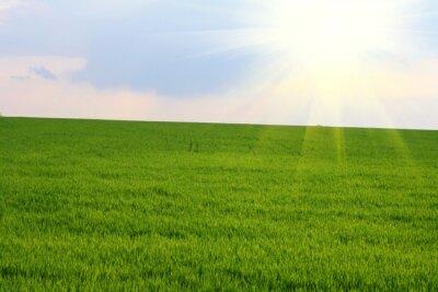 pole zielone i błękitne niebo na wiosnę