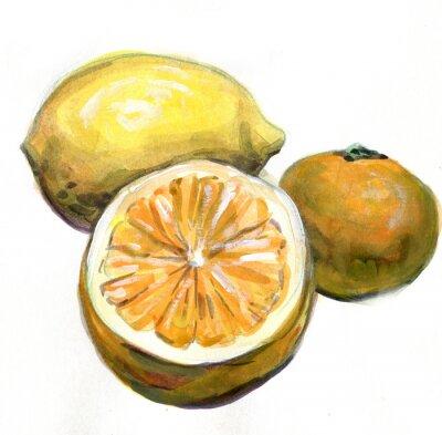 Naklejka Pomarańcza, cytryna, mandarynka. Owoce cytrusowe. akwarela