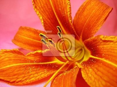pomarańczowy lilia