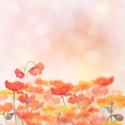Naklejka Poppy Flowers Blossom