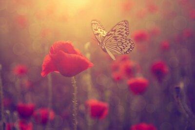 Naklejka Poppy i motyl