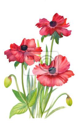 Poppy kwiaty na białym tle ilustracji
