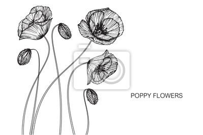 Naklejka Poppy kwiaty rysunek i szkic z line-art na białym tle.