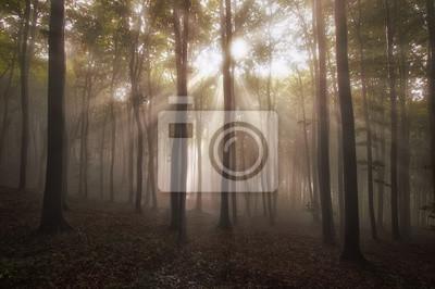 Promienie słońca w lesie rano