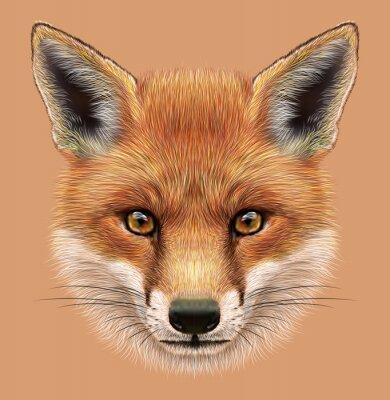 Naklejka Przykładami portret Red Fox. Cute puszysty twarz leśnej Fox.
