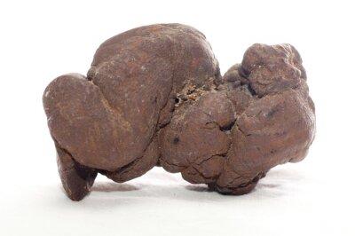 Naklejka pseudocoprolite, fossilized poop
