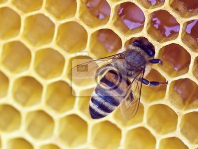 Pszczoła na tle wosku
