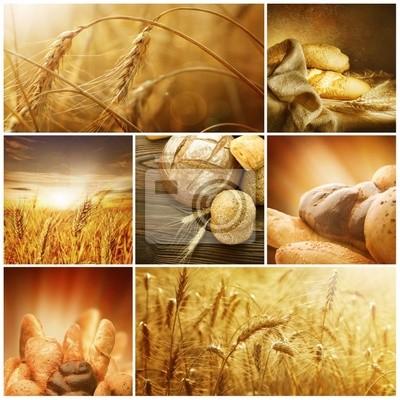 Pszenica koncepcje Collage.Harvest
