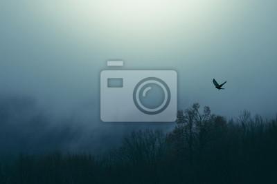 ptak latający nad mglisty las, krajobraz ciemny fantasy