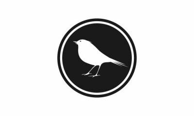 ptak w okręgu