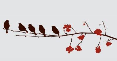 Naklejka ptaki na gałęzi jarzębiny