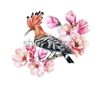 Naklejka Ptasi dudka obsiadanie na kwiatonośnej wiosny gałąź. Kwiaty magnolii. Akwarela. Ilustracja. Szablon. Obrazek. Zbliżenie. Karta