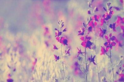 Naklejka purple wild flowers