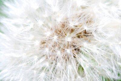 Naklejka pusteblume Großansicht